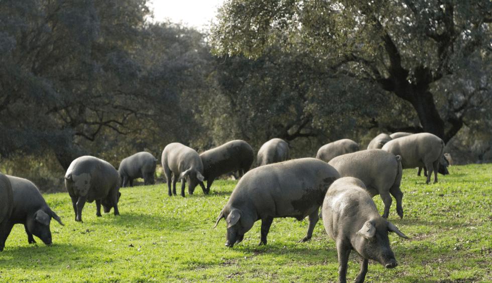 Las partes del cerdo ibérico